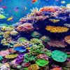 UAE to Get World's Largest Coral Reef Garden in World at Coast of Fujairah
