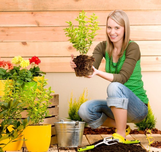 Tips to Creating a New Garden in Your Yard