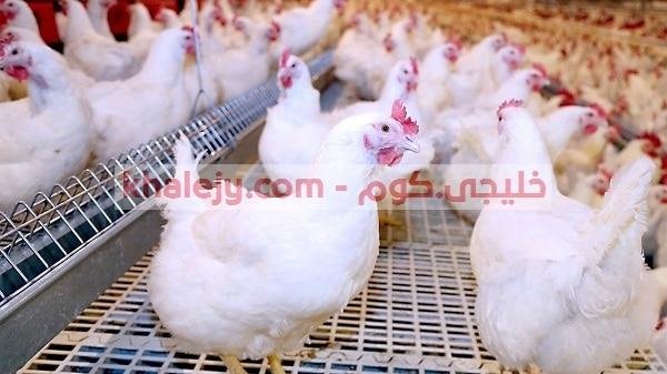 وظائف شاغرة في السعودية لغير السعوديين شركة مزارع دواجن