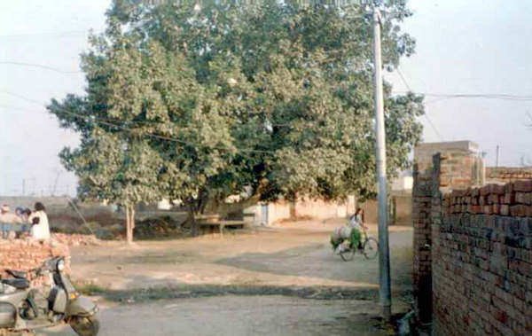 Place in Rataul where the DIG was shot down