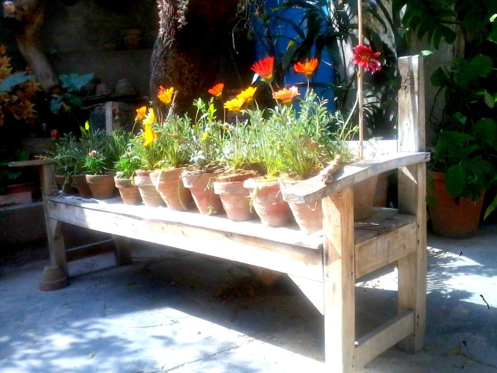 Organic Gardening, Future Plans & Me (2/6)