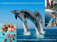 Dolphin tour Khasab
