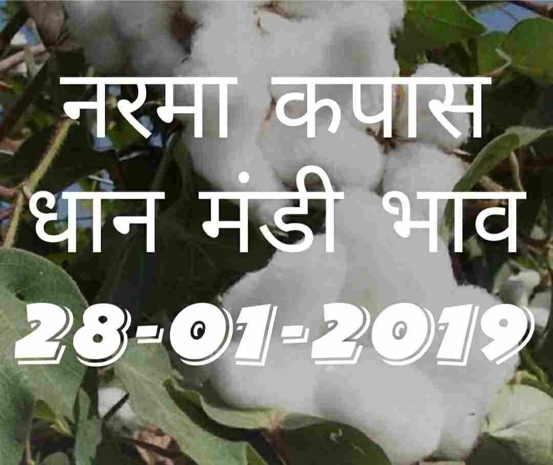 mandi-bhav-today-28-01-2019