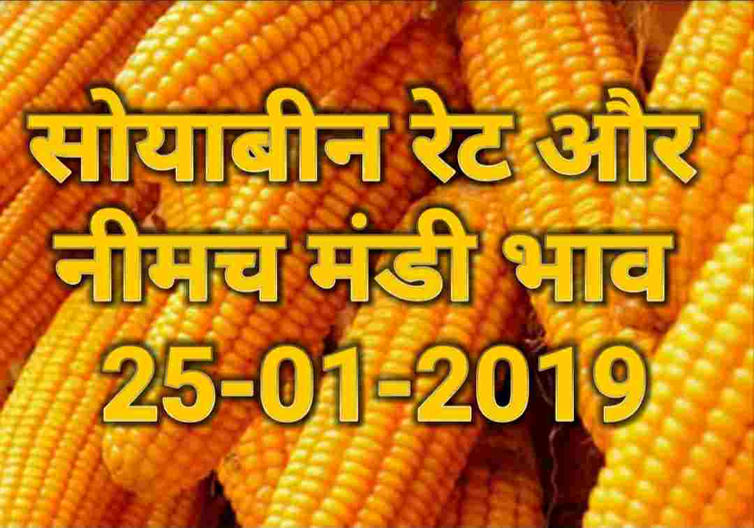 neemuch-mandi-bhav-25-01-2019 , soyabean-rates-today
