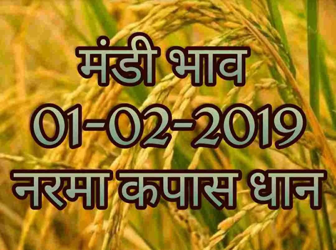 mandi-bhav-01-02-2019 narma bhav , kapas mandi