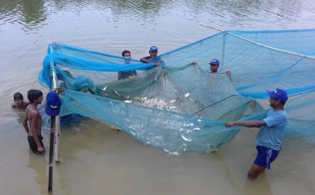 calender for fish farming