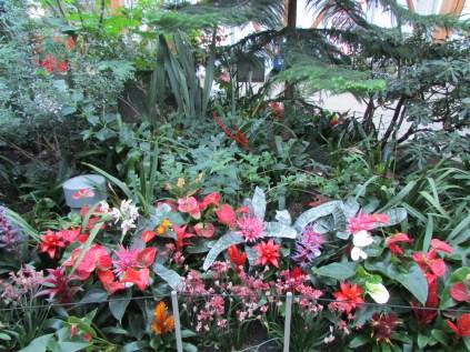 flowers in winter gardens