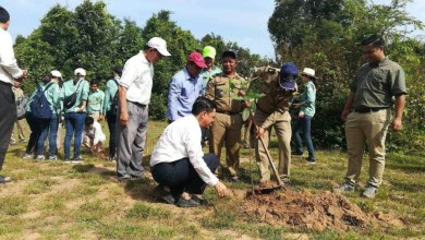 Photo of 30,000 Trees a Year Planted in Angkor