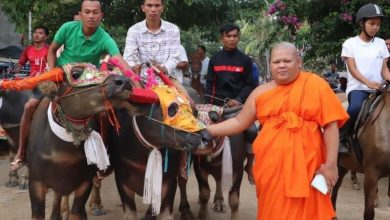 Photo of Traditional blessing of horses and buffaloes