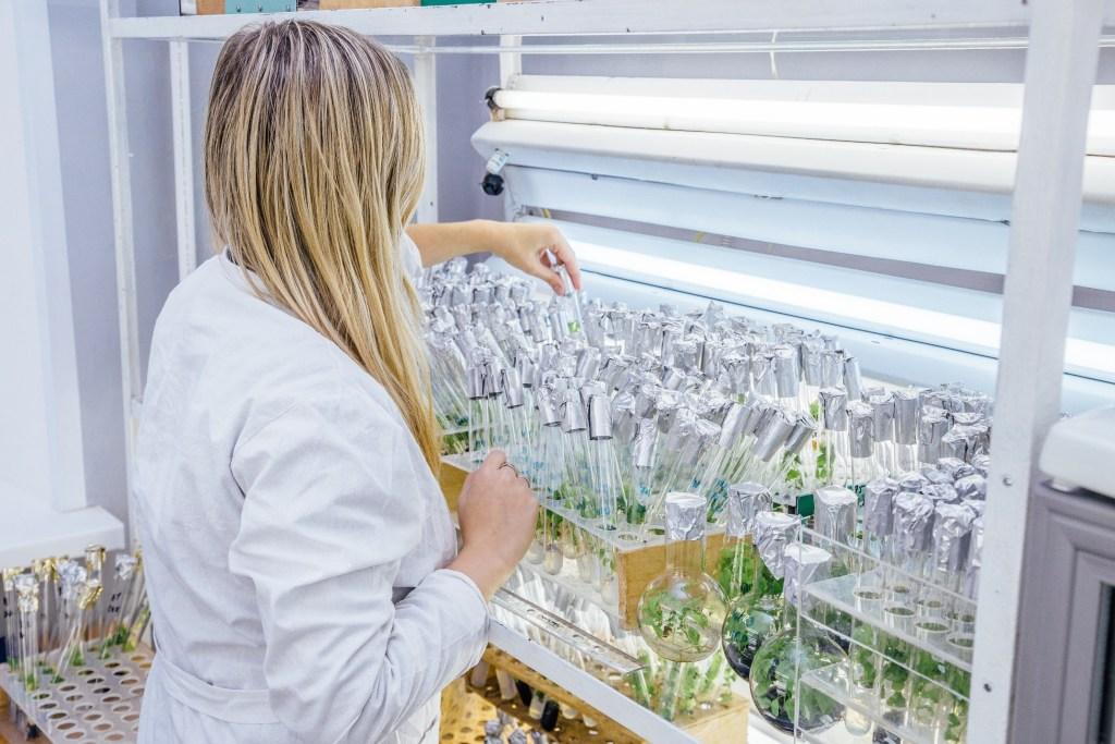 Scientist growing plant cells in vitro