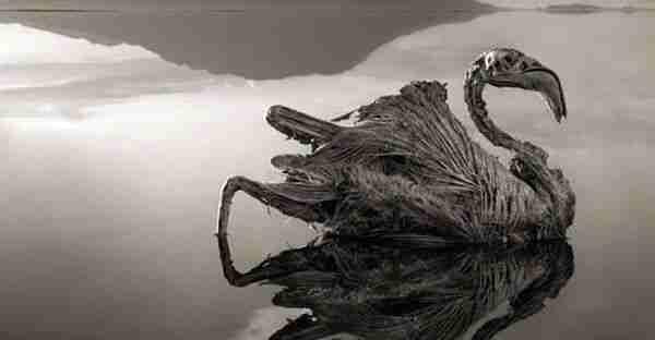 Natron-Gölü-Suları-Kuşları-Nasıl-Taşa-Çeviriyor