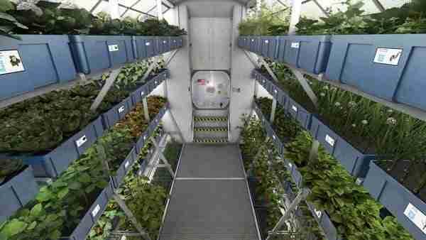 Mars'ta nasıl yaşayacak bitki 1