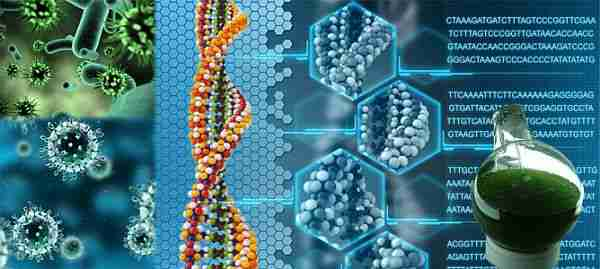 Ahtapot-ahtapot_dnası-uzaylı-uzaylı_ahtapot-epigenetik