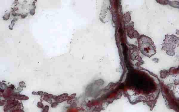 İlk_fosil_4_milyar_yıldan_yaşlı.