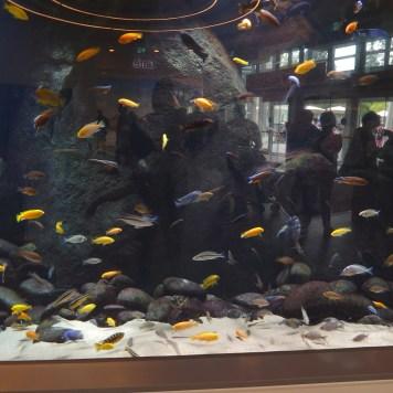 Colourful fish tank