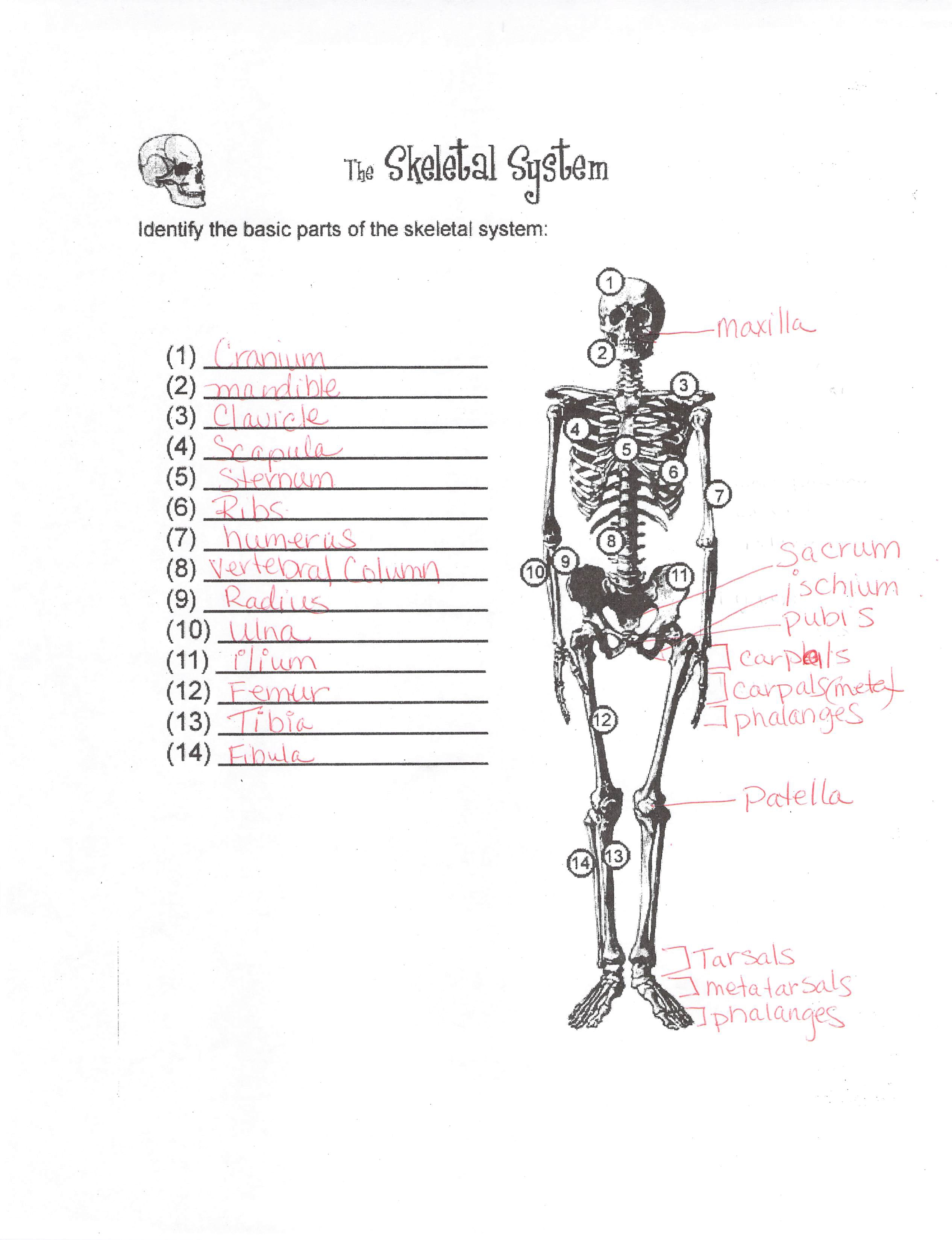 Kearns Biology