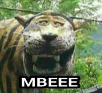 kumpulan meme macan cisewu tahun 2017 (2)