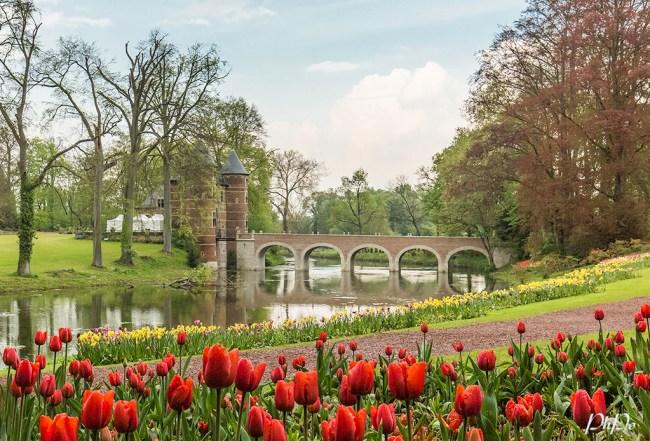 PhPo tulip 2