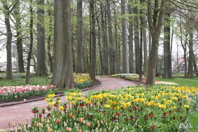 PhPo tulip 2e