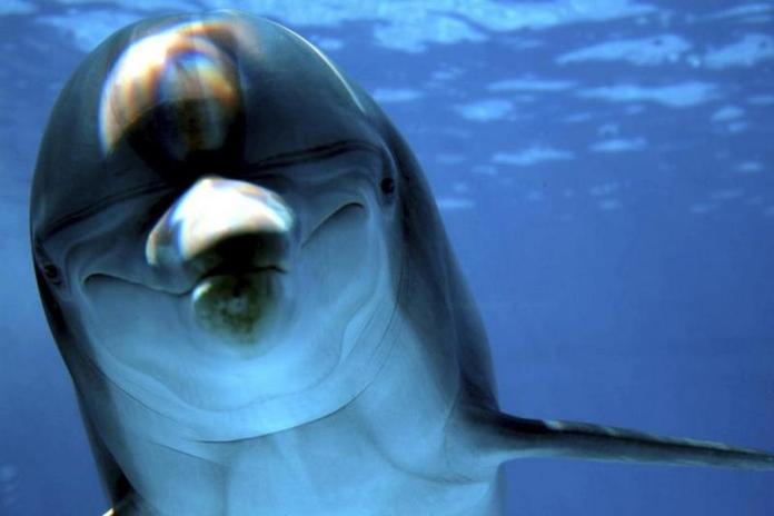 dolphins-masturbate-khurki.net