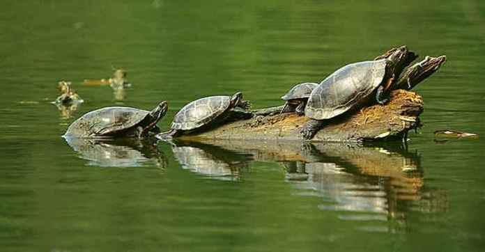 turtle-masturbate-khurki.net