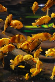 A beautiful swarm of golden yellow