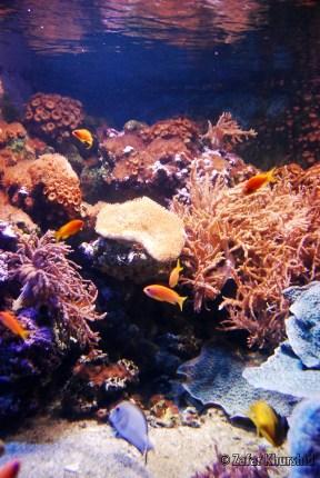Orange Reefs