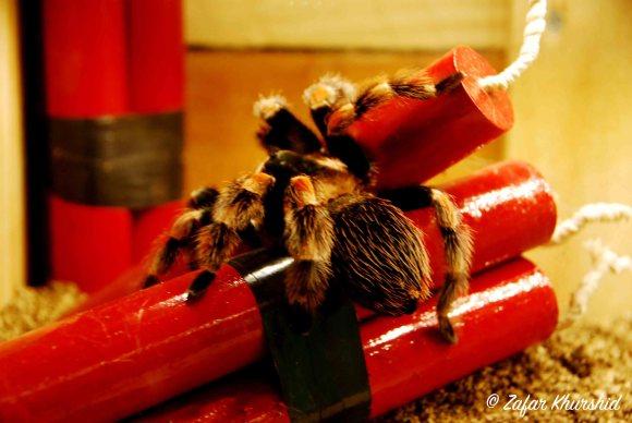 A vibrant and (I'm sure misunderstood) Tarantula