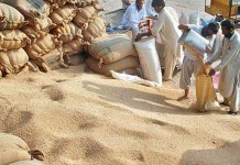 Punjab to provide 5,000 metric tons of wheat to KP on daily basis