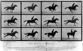 Eadweard Muybridge, The Horse in Motion, 1878