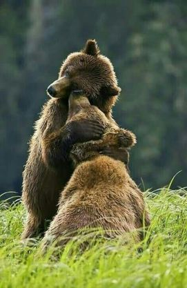 bear watching Romania brown bears hug