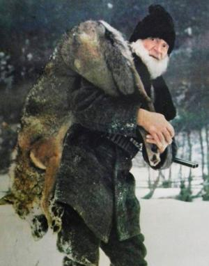 wolf watching Romania wolf hunter