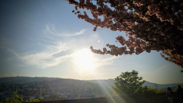 Cseresznyevirágzás Budai-hegyekkel
