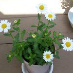 花とTAFRO症候群