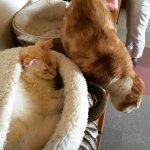 仕事で終わったGW・・・噂の「猫カフェ」初体験。