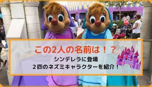 ディズニーにいるネズミのキャラクターの名前は?シンデレラなどに登場する少しマニアックキャラクター