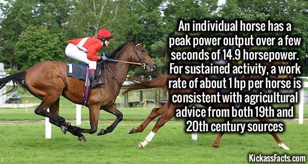 1259 Horse Running