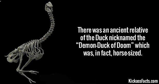 1753 Demon-Duck of Doom