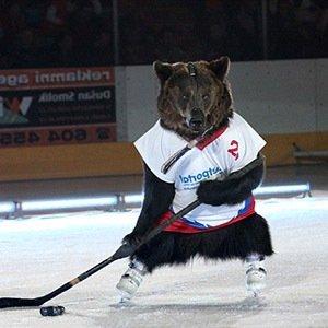 Bear Hockey-Interesting Facts About Ice Hockey