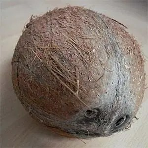 Coconut Juice-Interesting Facts About World War 2