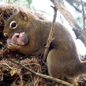 Squirrels Adopting Orphans-Random Facts List