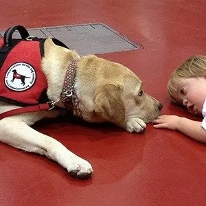 Autism Therapy Dogs