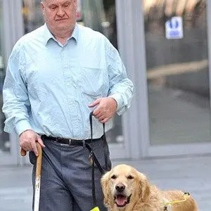 Sight Guide Dogs