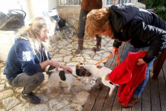 The dog rescue volunteer delivering Daisy