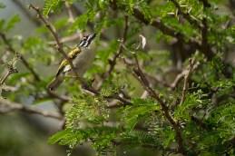 tinkerbird