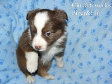 Cloud 6 weeks Sold
