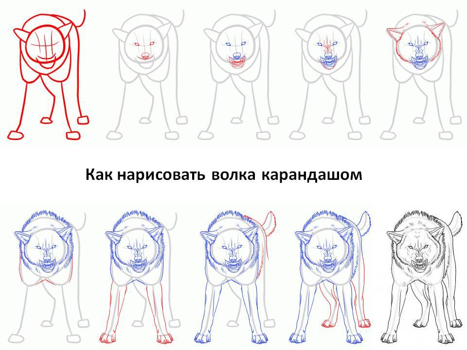 средство волк рисунок поэтапно здешние пороги