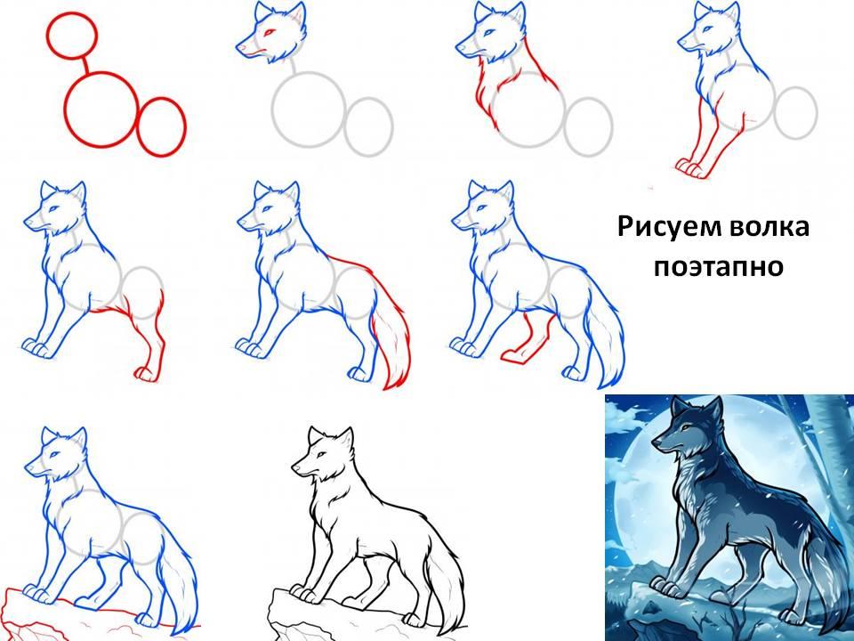 картинки нарисовать волка карандашом поэтапно приказывает губернатору