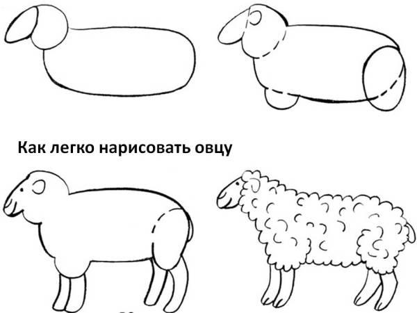 Как нарисовать овечку барана и ягнёнка Сайт для детей и