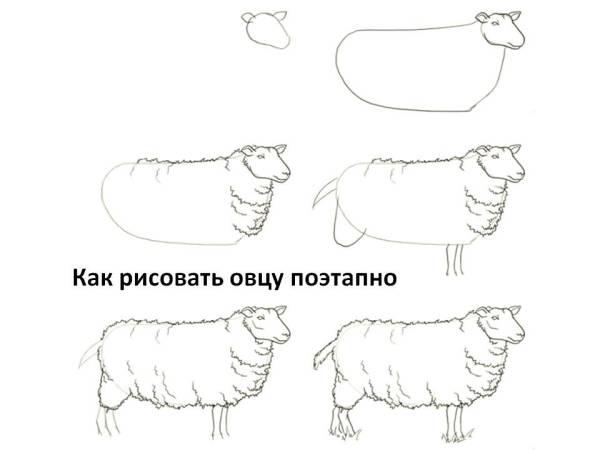 Как нарисовать овечку барана и ягнёнка